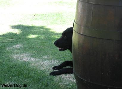 RSA-Kellerhund.jpg