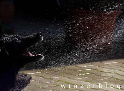 kellerhund1-copyright-winzerblog.jpg